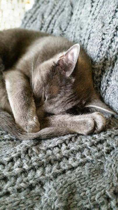 Cat, Grey, Asleep
