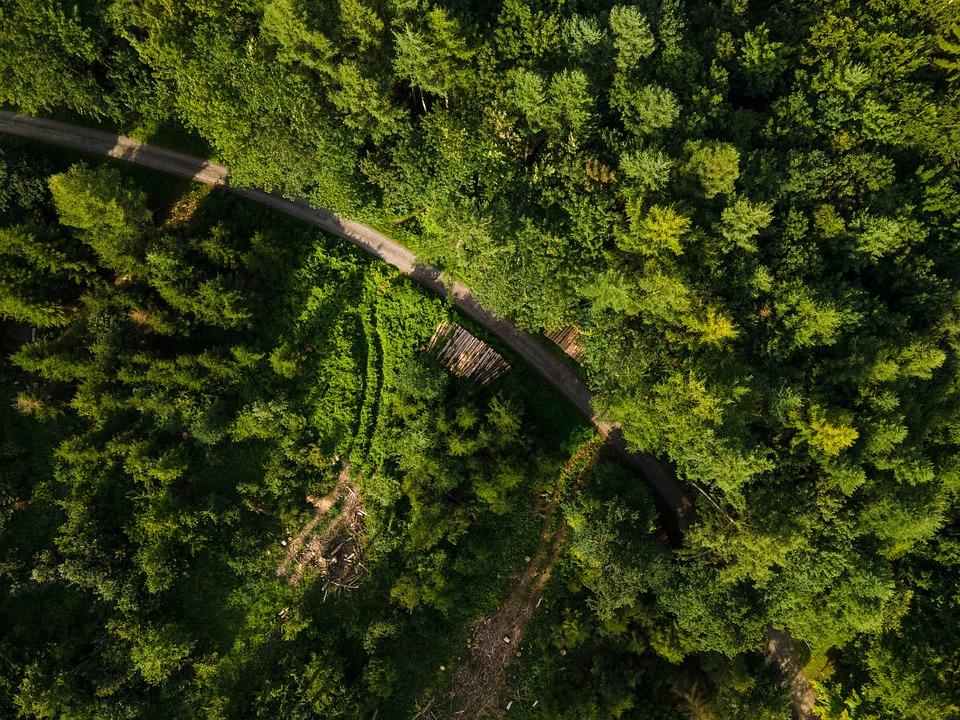 Forest, Trees, Green, Road, Highway, Asphalt, Aerial