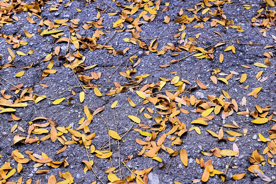 Autumn, Leaf, Asphalt, Fall