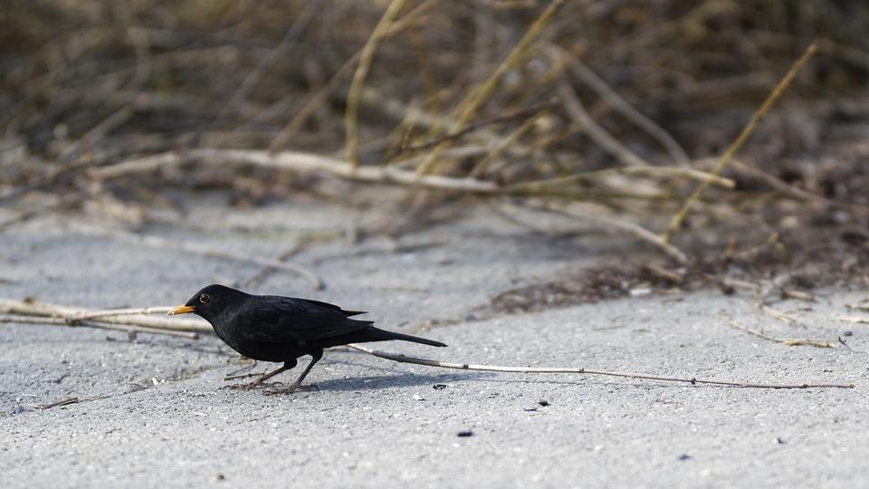 Only, Bird, Plumage, Black, Below, Asphalt, Plants, Dry