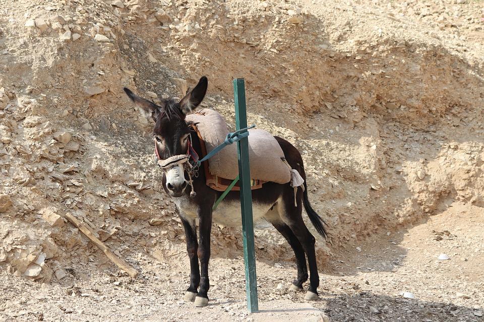 Israel, Donkey, Ass, Tourism, Nature