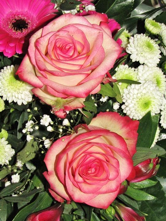 Flowers, Roses, Gerbera, Bonnie's, Mummies, Asters