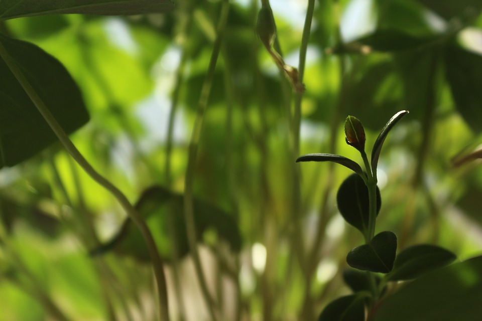 Grass, Houseplants, At Home, Oxalis, House Plant