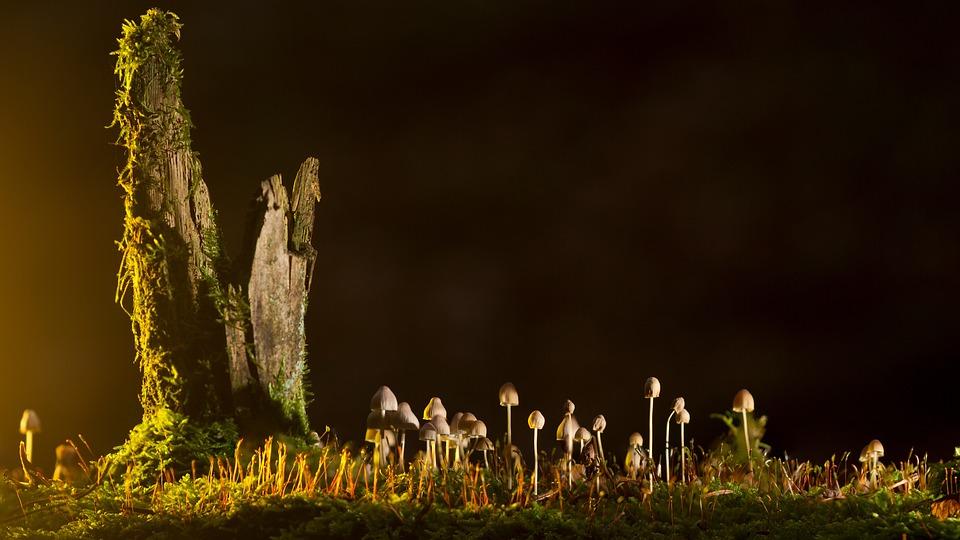 Mushrooms, Small Mushroom, Nature, At Night