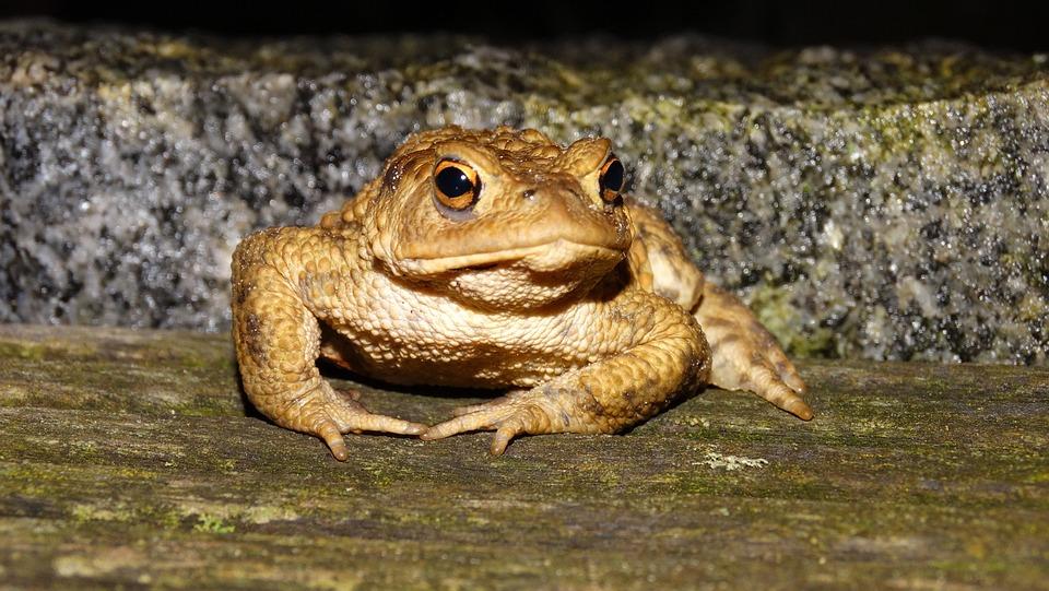 Frog, At Night, Wood Floor