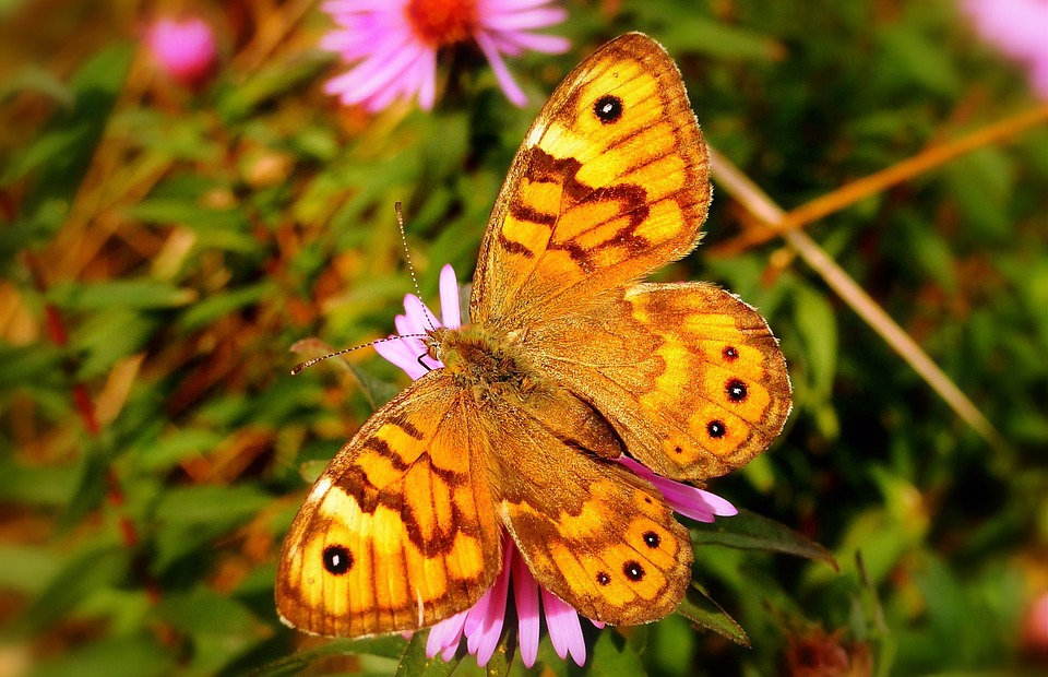 Butterfly Day, Nature, Insect, Flower, At The Court Of