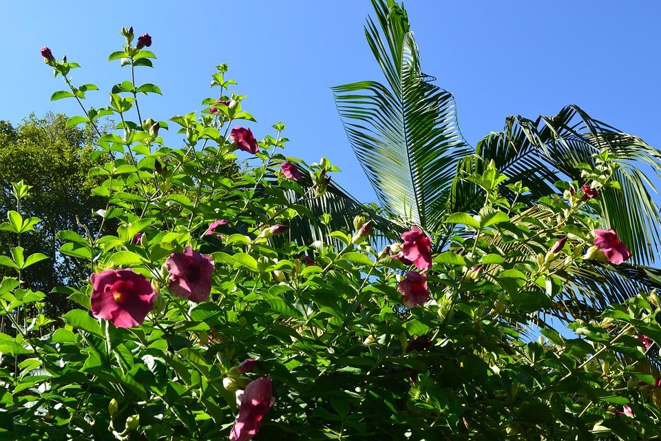 Plant, Leaf, Nature, Flower, Tree, Atlantic Forest