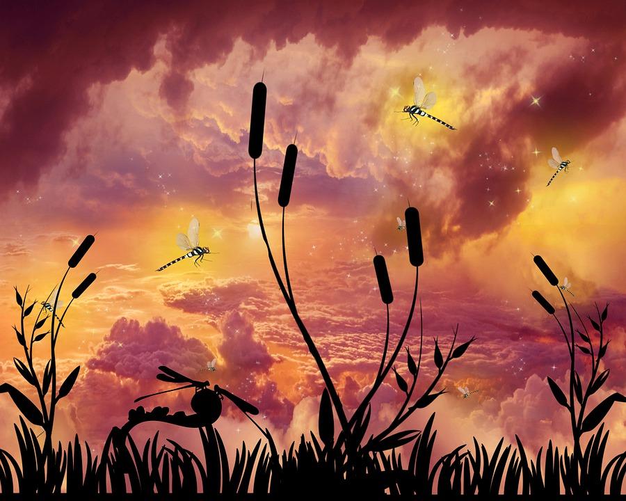 Dragonflies, Twilight, Sky, Atmosphere, Clouds, Sun