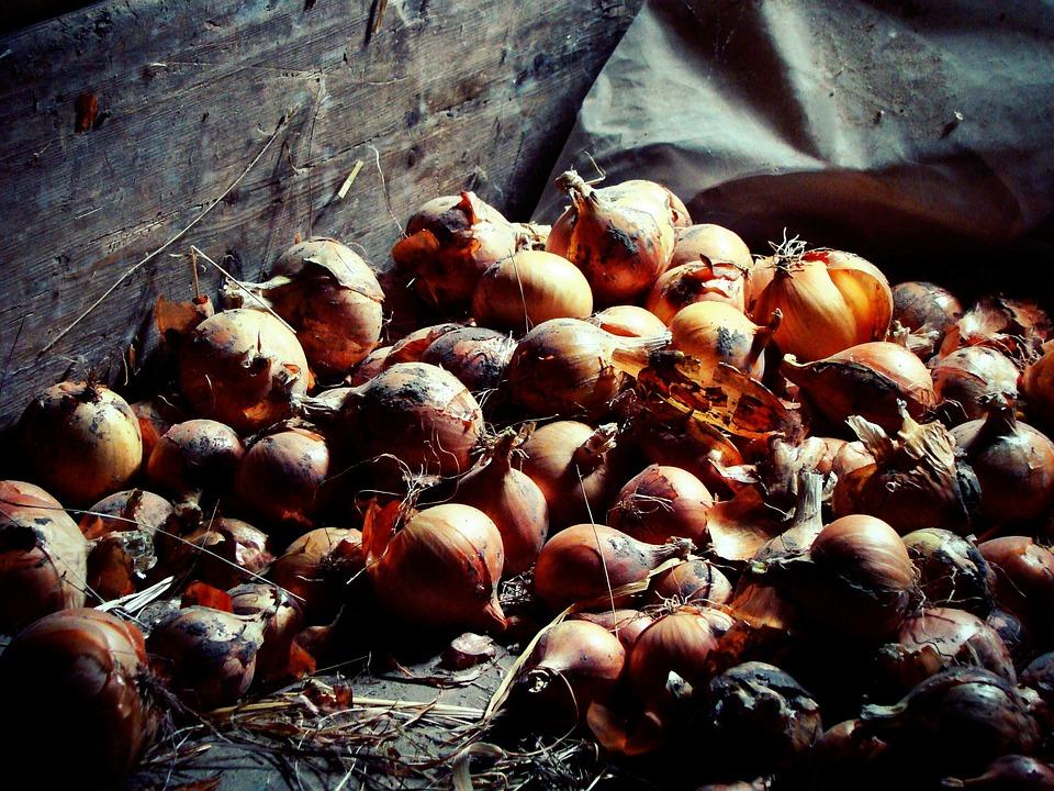 Onion, Bulbs, Attic, Food, Village