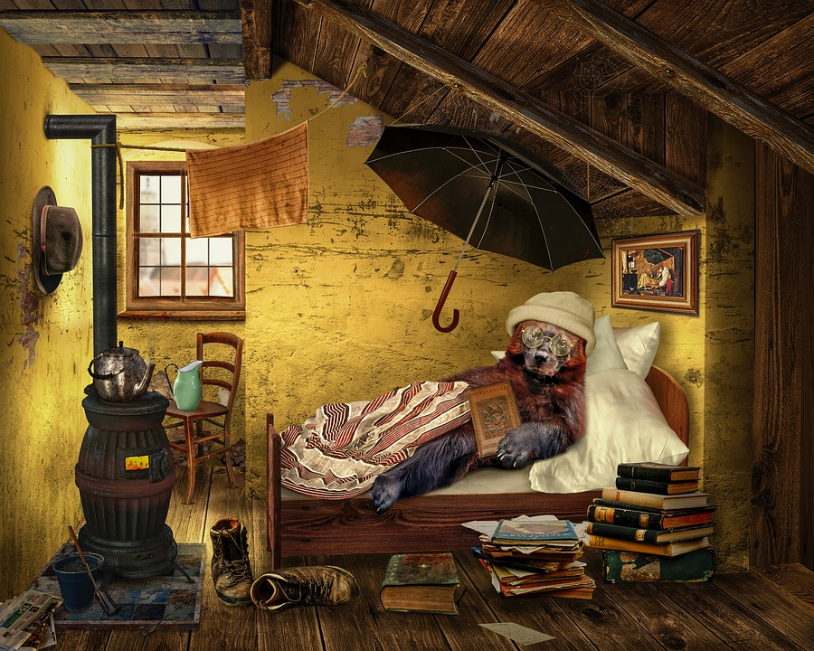 Bear, Attic, Room, Read, Education, Know, Poverty