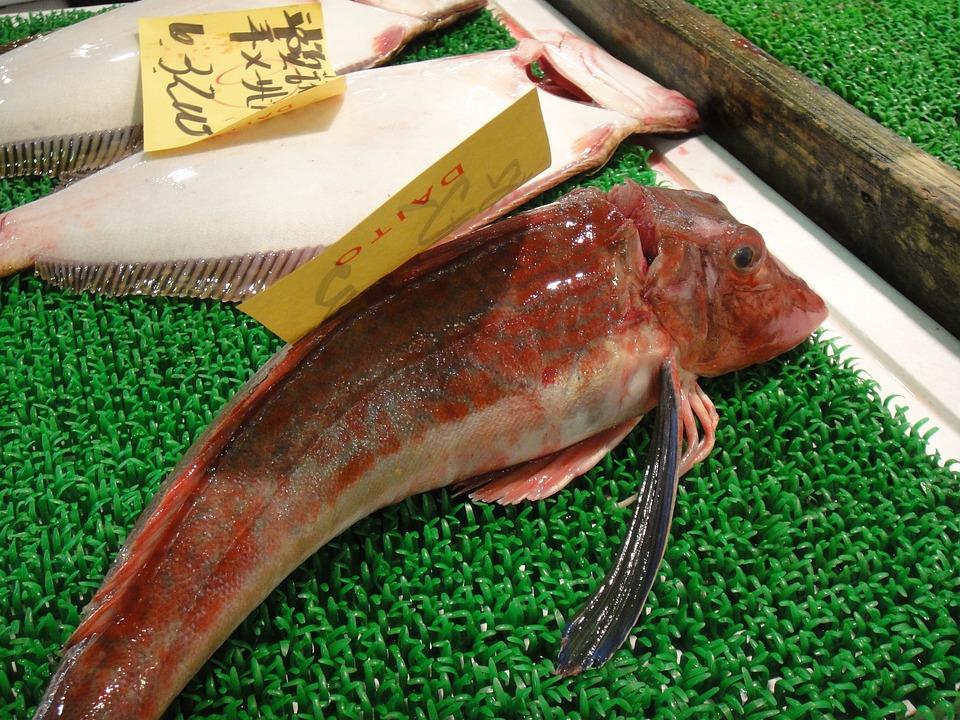Fish, Market, Japan, Tokyo, Tsukiji, Attraction