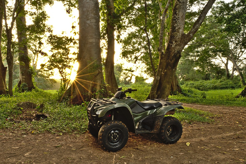 Woods, Atv, Forest, Quad, Green, Trail, Vehicle, Fun