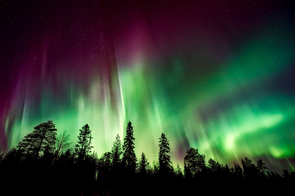 Aurora Borealis, Northern Lights, Forest, Trees, Woods