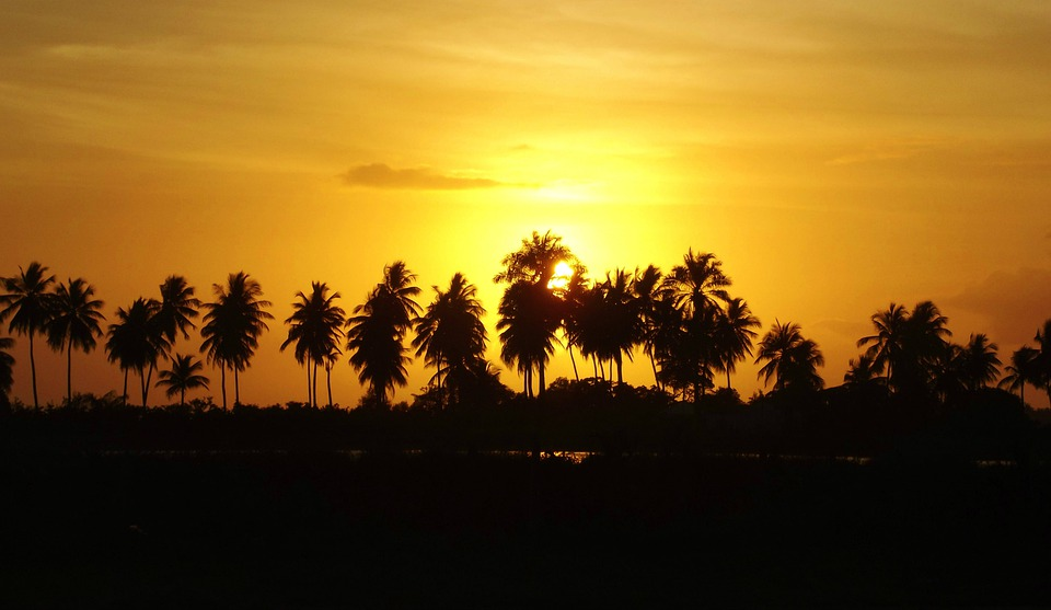 Aurora, Coconut Trees, Sol, Mar, Beira Mar, Beach