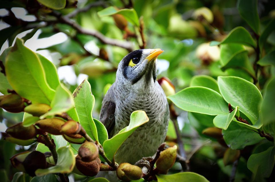 Bird, Toowoomba, Queensland, Australia, Green, Trees