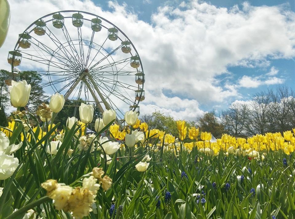 Free photo australia ferris wheel flowers sky spring canberra max flowers spring canberra australia ferris wheel sky mightylinksfo