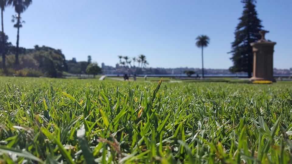 Australia, Sydney, Nsw, Harbour, Green, Grass, Sky