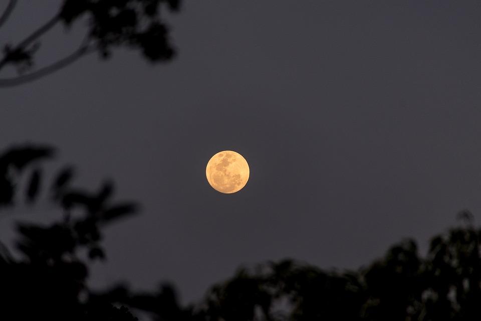 Moon, Full, Harvest Moon, Sky, Trees, Night, Australia