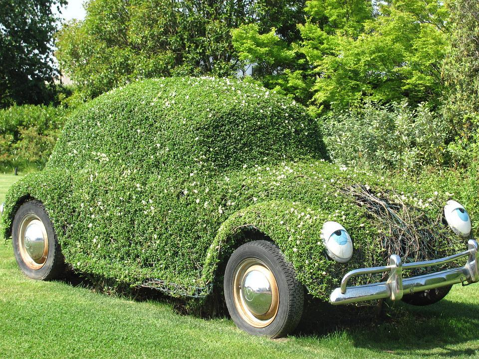 Auto, Beetle, Flower, Plants
