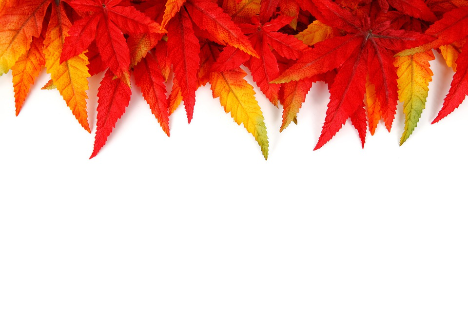 Abstract, Autumn, Background, Bright, Frame, Color