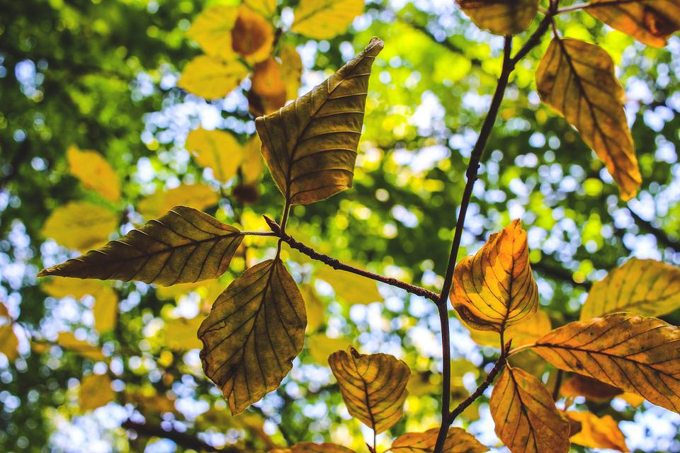 Leaves, Tree, Aesthetic, Autumn, Summer, Colorful