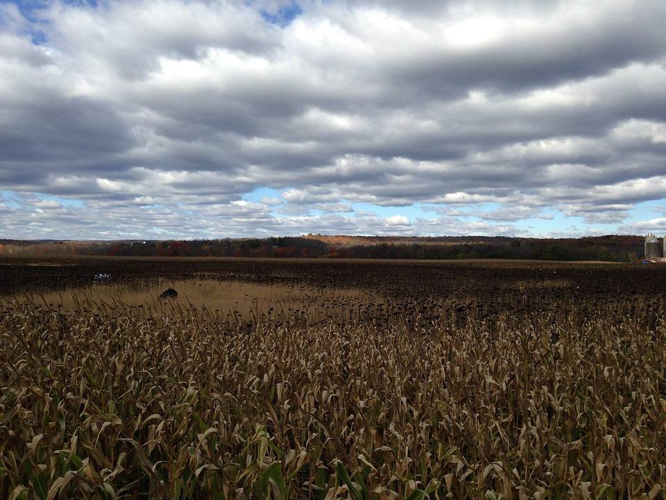 Cornfield, Autumn, Sky, Agriculture, Field, Farm, Corn