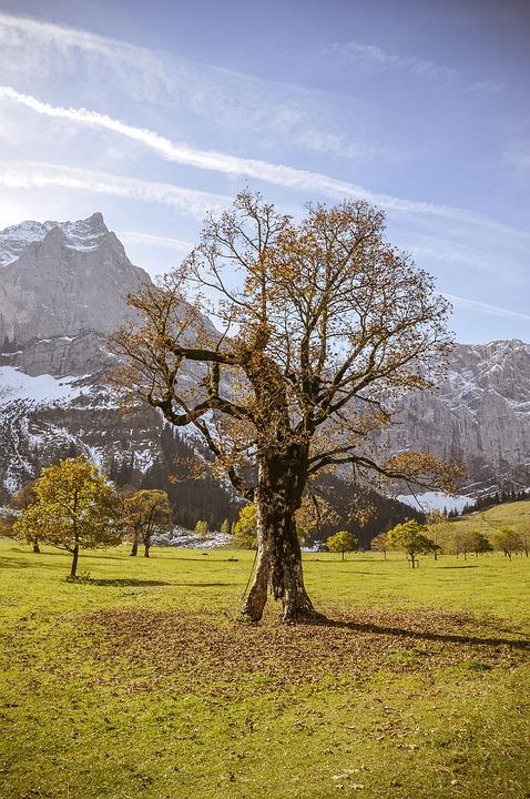 Ahornboden, Maple, Tree, Autumn, Mountains, Karwendel