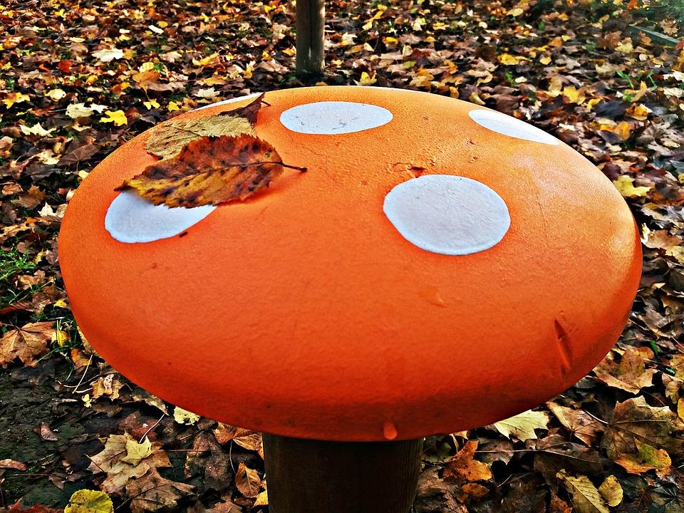 Amanita, Autumn, Mushroom, Fly Agaric Red, Red