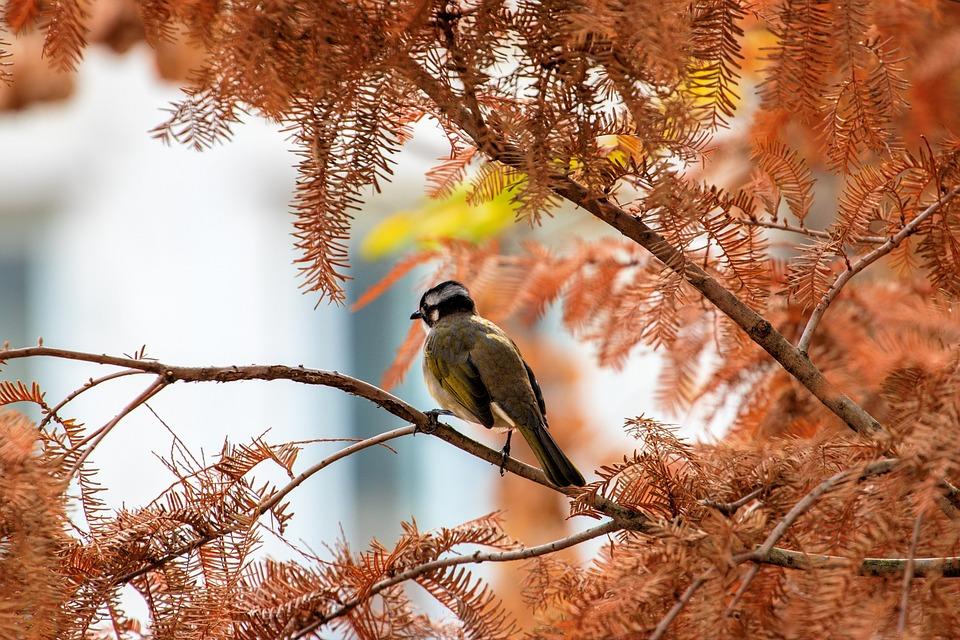 Bird, Animal, Nature, Tree, Autumn