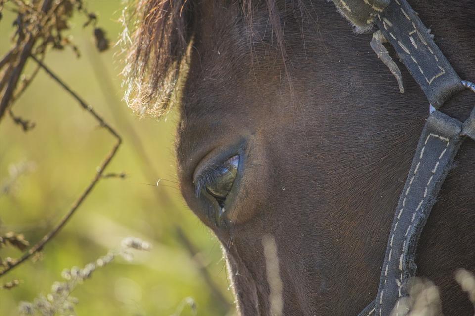 Horse, Horses, Animal, Grass, Dry, Autumn