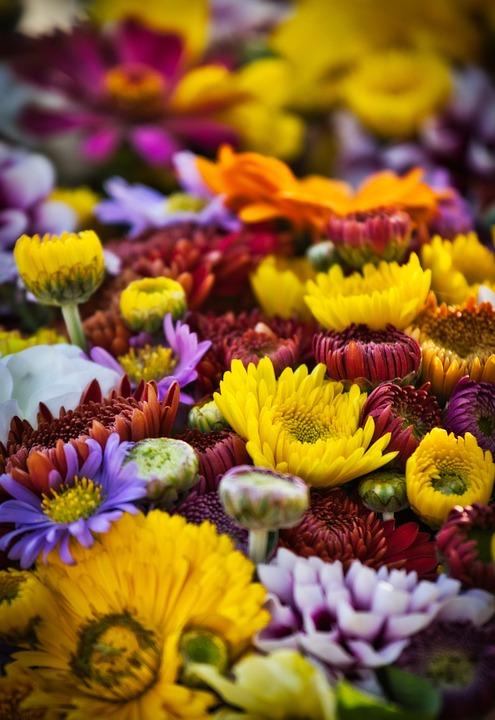 Asters, Flowers, Autumn, Bouquet, Farmers Local Market