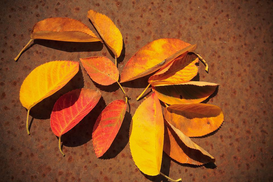 Autumn Beginning, Colorful, Leaves, Autumn, Fund