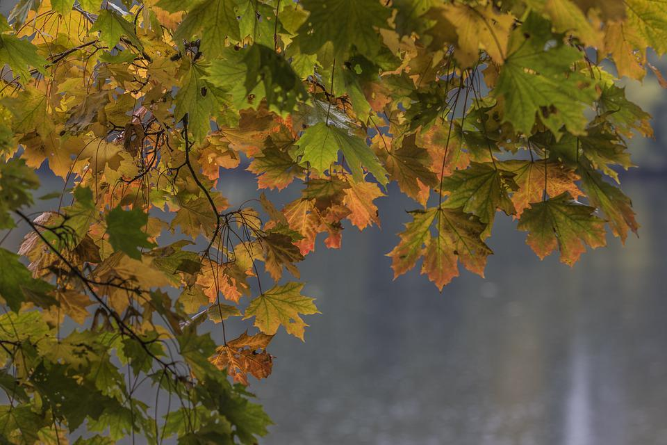 Autumn Colors, Leaf, Nature, Autumn, Season, October