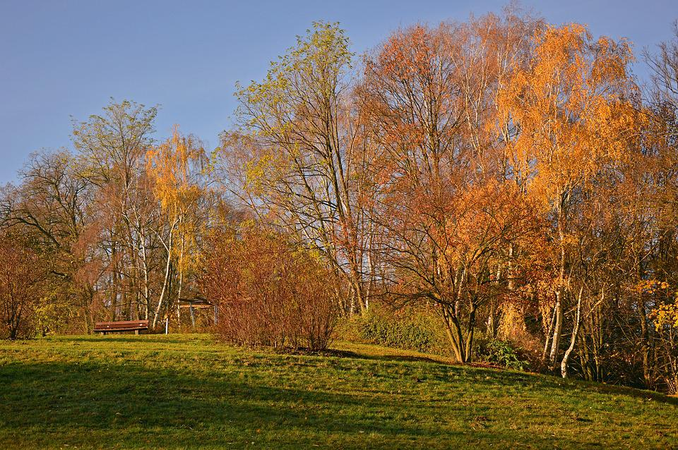 Autumn, Landscape, Autumn Landscape, Nature, Trees