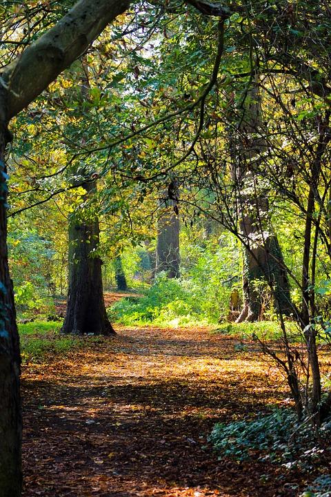 Autumn Leaves, Fall Leaves, Path, Woodland, Autumn
