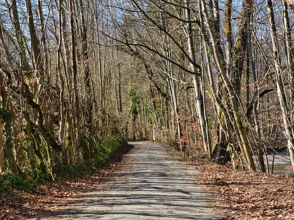 Spring, Autumn, Away, Forest Path, Mood, Avenue, Trees