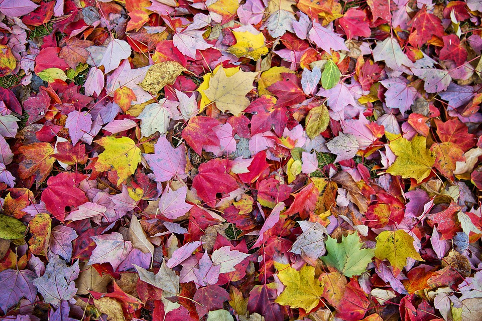 Fall Leaves, Autumn, Background, Backdrop, Leaves