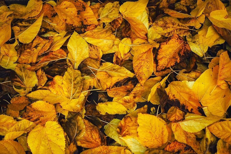 free photo autumn background leaves season fall leaf max pixel