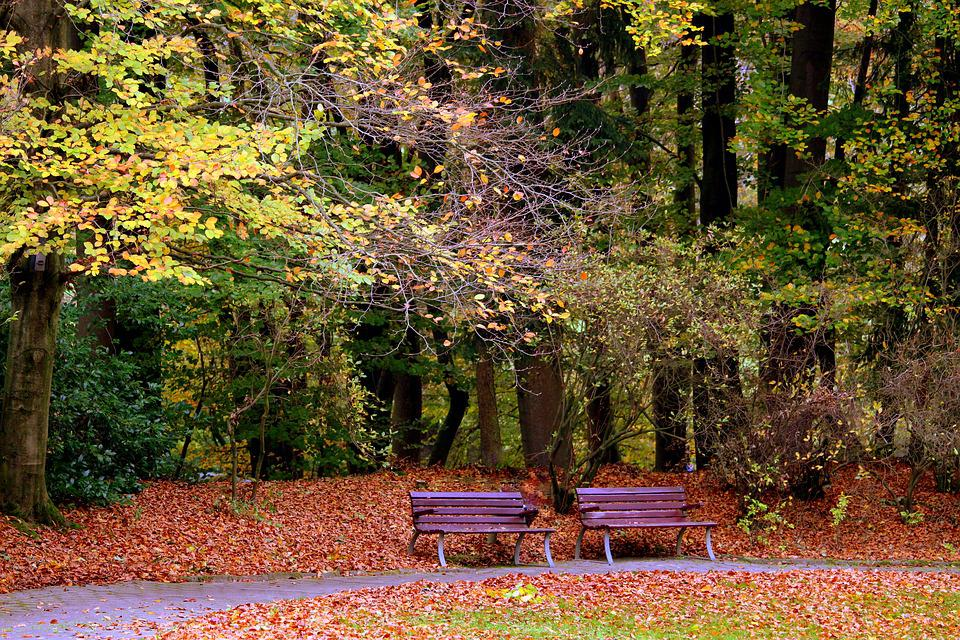 Autumn, Bank, Benches, Leaves, Forest, Rest, Seasons