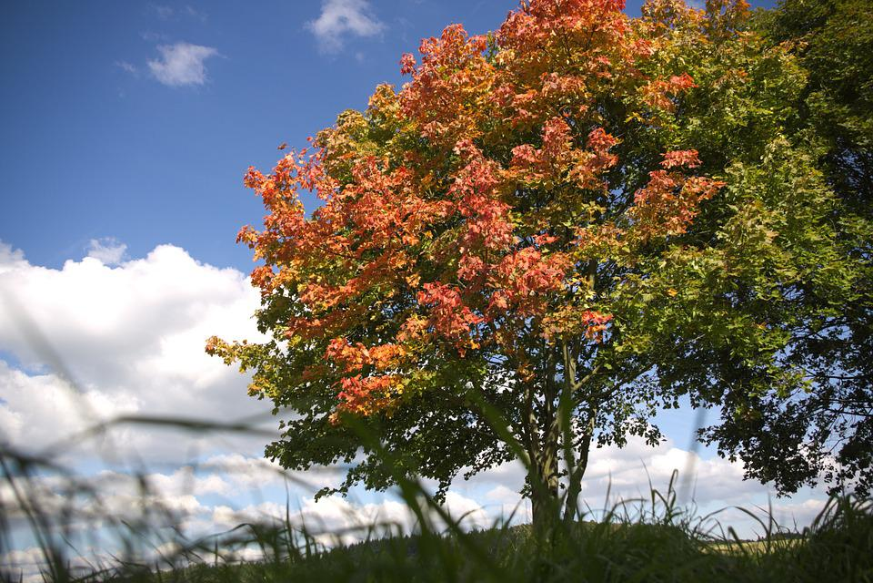 Autumn, Beginning Of Autumn, Autumn Beginning, Tree