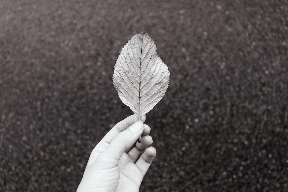 Hand, Holding, Autumn, Fall, Leaf, Black And White