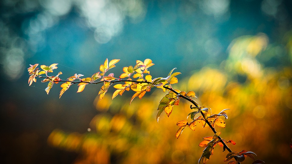 Autumn, Leaves, Branch, Bright, Autumn Mood, Emerge