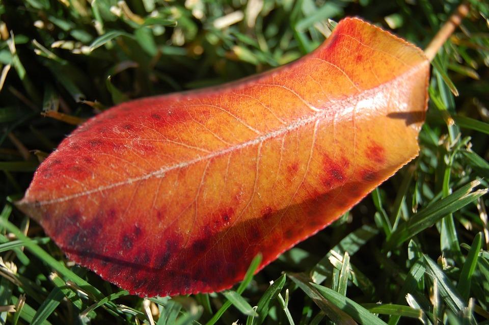 Fall, Autumn, Leaf, Brilliant, Color, Turning, Turned