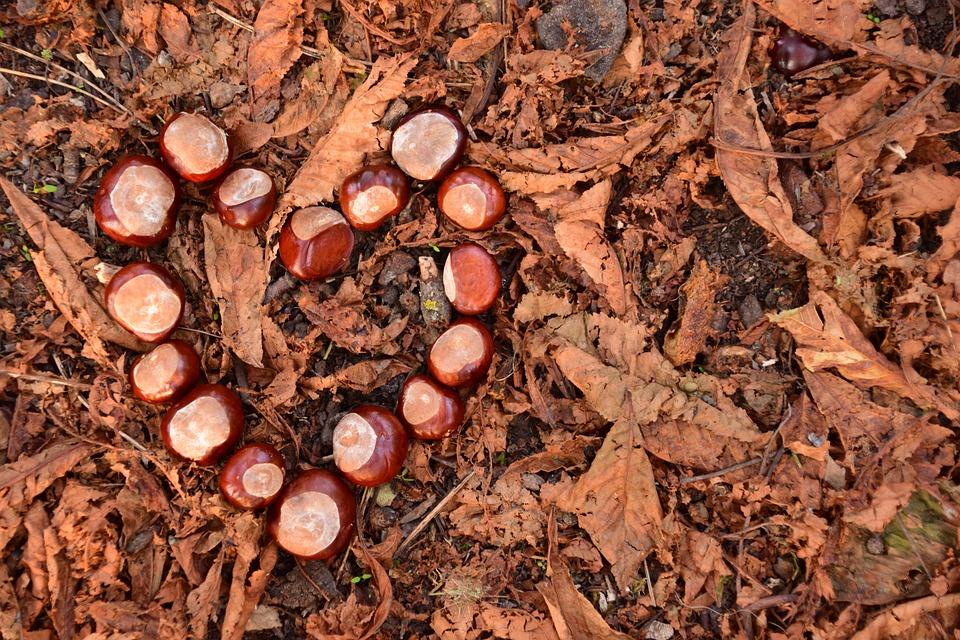 Heart, Chestnut, Chestnut Heart, Autumn, Brown