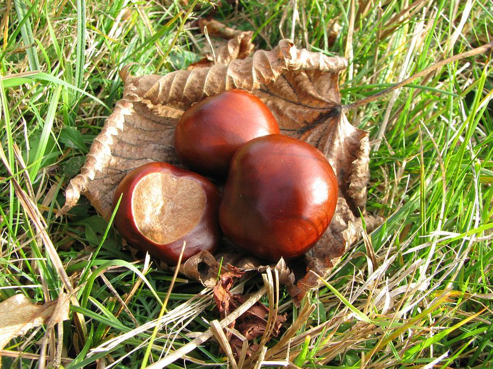 Nature, Chestnut, Autumn