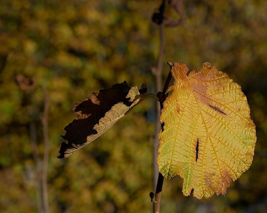 Leaf, Discolored, Autumn, Fall Color, Close