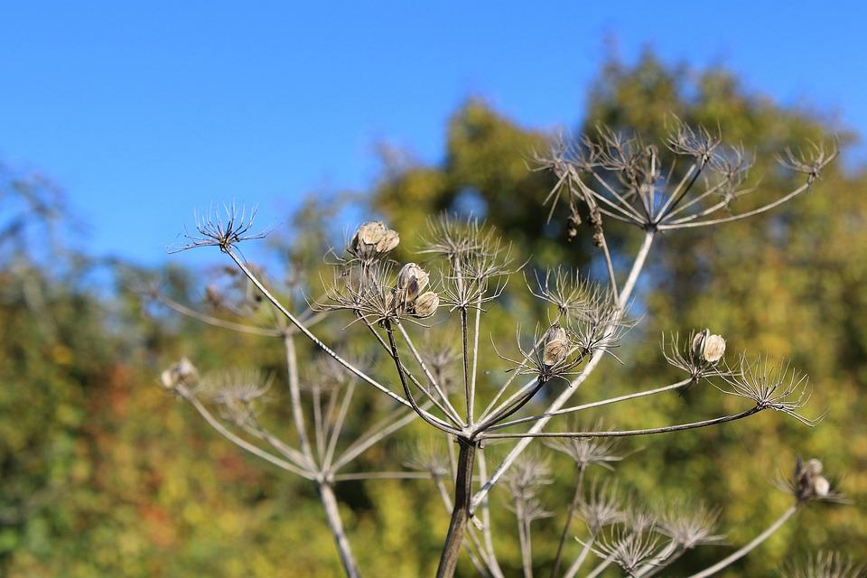 Autumn Mood, Plant, Green, Nature, Close, Autumn