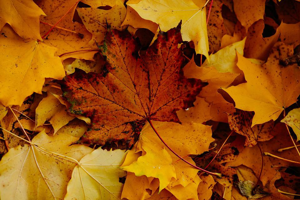 Nature, Abstract, Autumn, Brown, Closeup, Color, Day