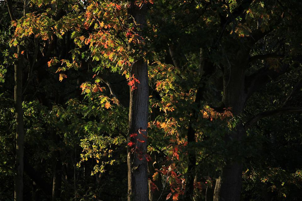 Autumn, Color, Forest, Colorful, Sheet, Tree, Nature