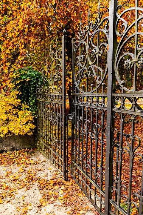 Autumn, Fall Foliage, Leaves, Fall Color, Colorful